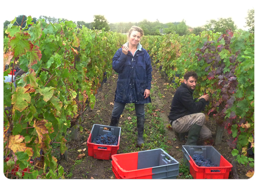 10-7-10-Harvesting-in-the-Clos-Senechal-1-Small
