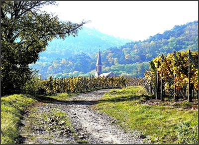 Alsace_landscape