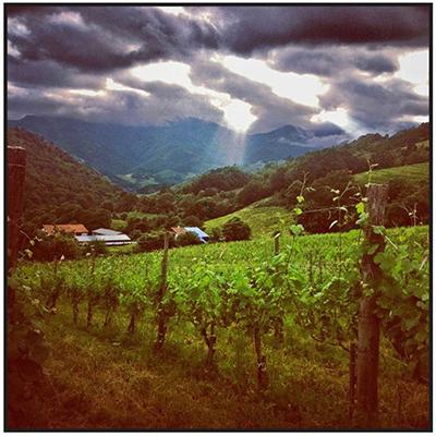 Arretxea-vineyards