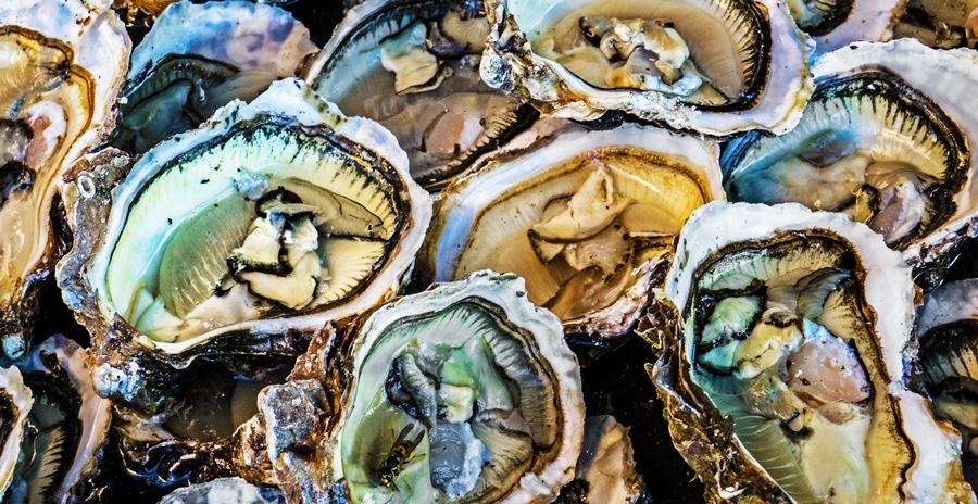 November-oysters-blog